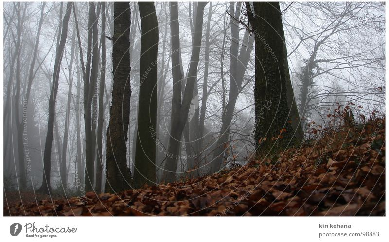 Tree Calm Leaf Loneliness Forest Dark Cold Autumn Gray Lanes & trails Fear Fog Wet Perspective Hope Grief