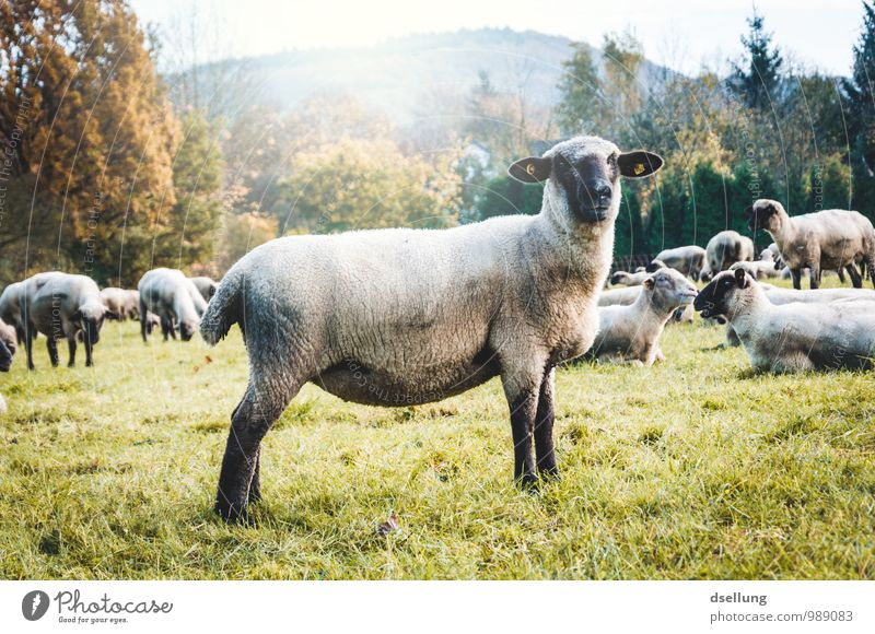 Nature Green White Landscape Animal Black Forest Environment Yellow Autumn Meadow Natural Gray Healthy Brown Field