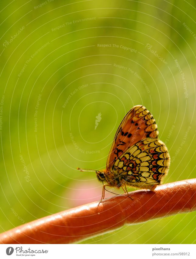 Nature Beautiful Green Summer Bright Orange Esthetic Wing Insect Butterfly Feeler Delicate Polka dot