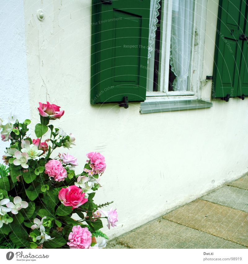 Green Flower House (Residential Structure) Window Wall (building) Blossom Style Wall (barrier) Stone Germany Pink Car Window Living or residing Rose Romance Decoration