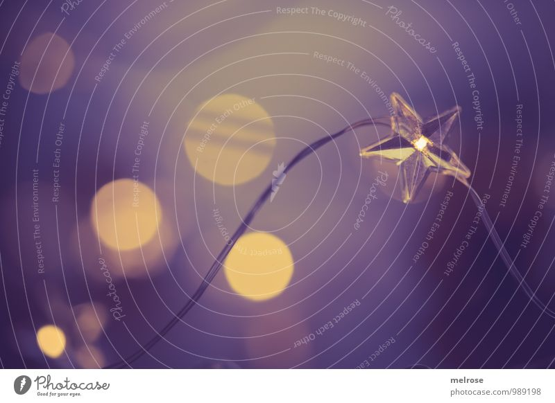 Relaxation Calm Winter Feasts & Celebrations Moody Dream Glittering Illuminate Idyll Gold Wait To enjoy Warm-heartedness Star (Symbol) Hope Violet