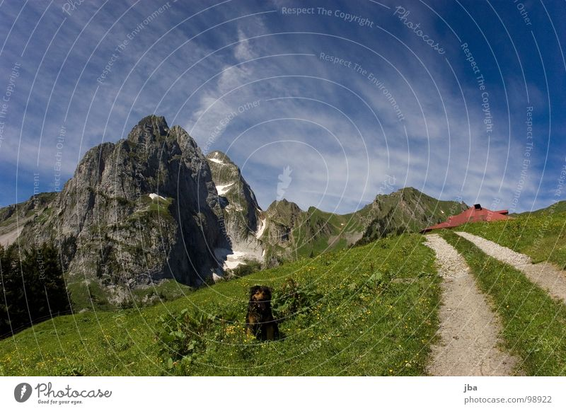 Dog Nature Beautiful Animal Meadow Snow Mountain Grass Lanes & trails Stone Healthy Rock Footpath Hut Fir tree Americas