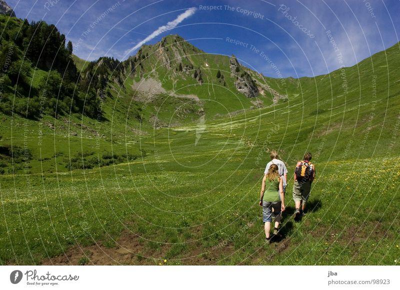 Nature Beautiful Flower Meadow Grass Mountain Stone Healthy Hiking Going Rock Idyll Fir tree Americas Brook Motive