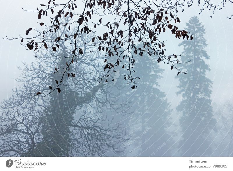 Sky Nature Leaf Landscape Winter Forest Environment Emotions Natural Gray Wood Brown Weather Fog Authentic Esthetic