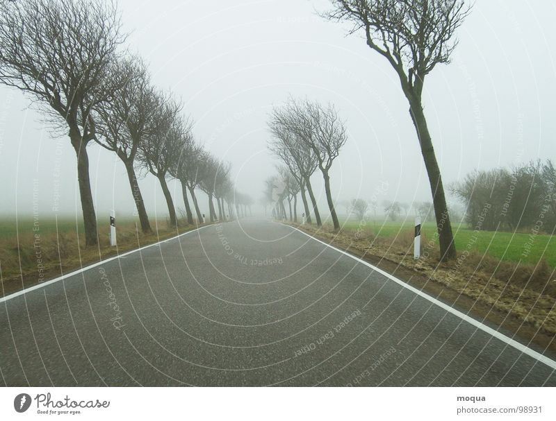 warped ll Tree Autumn Winter Fog Bad weather Gray Wet Traffic lane Field Meadow Loneliness Horizon Seasons Comfortless Dreary Rain Green Brown Street Wind