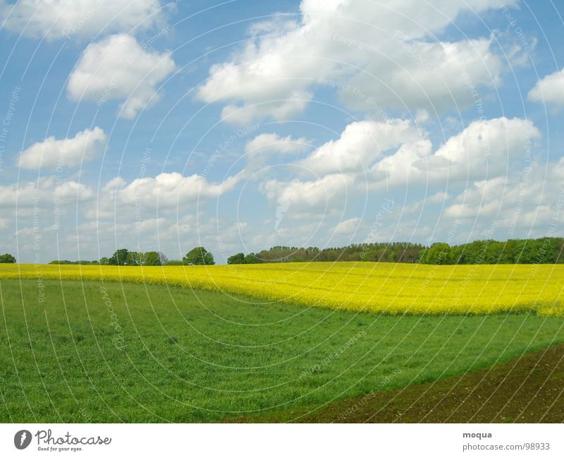 rapsfeld Spring Summer Green White Yellow Brown Light blue Tree Forest Meadow Field Horizon Hill Clouds Agriculture Seasons Canola Sky Blue Earth