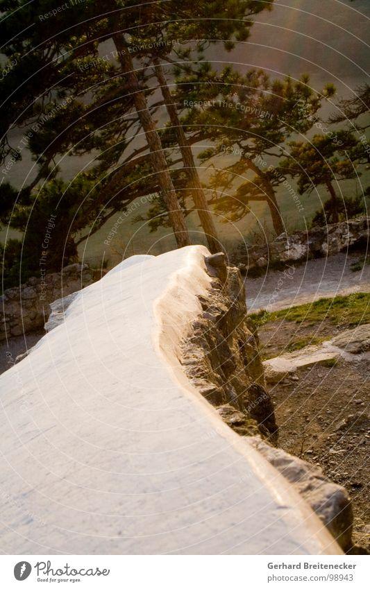 inclination group Wall (barrier) Forest Tree Scots pine Sunbeam Crazy Tilt