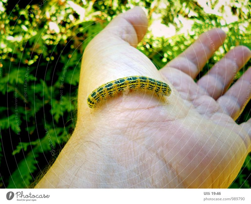 Human being Nature Beautiful Green Summer Hand Animal Yellow Warmth Small Garden Elegant Esthetic Observe Cute Fingers