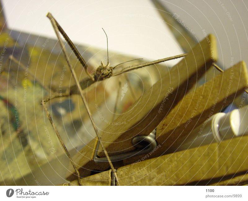 locust invasion Transport stick insect