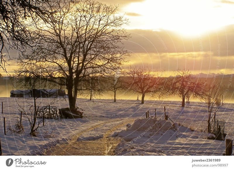 Nature Beautiful Tree Sun Winter Cold Snow Landscape Ice Frost Celestial bodies and the universe Winter sun