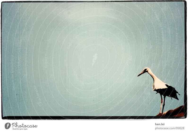 Old Animal Bird Flying Birthday Roof Retro Feather Frame Jubilee Beak Birth Stork Marginal phenomenon