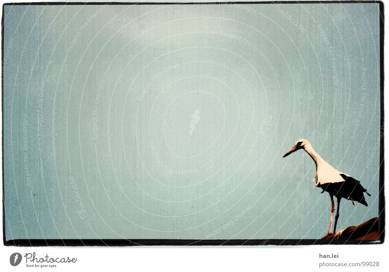 Old Animal Bird Flying Birthday Roof Retro Feather Frame Jubilee Beak Stork Marginal phenomenon