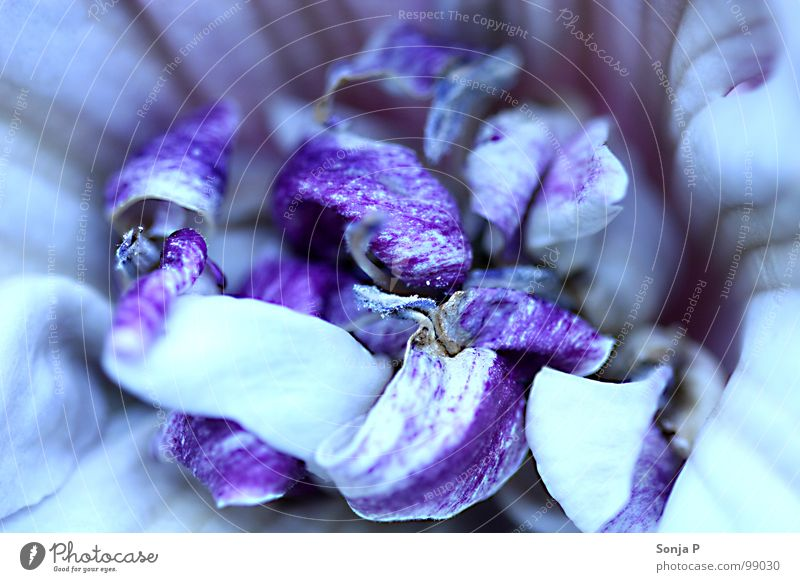 Nature Flower Summer Blossom Spring Garden Violet Dive Depth of field Blossom leave