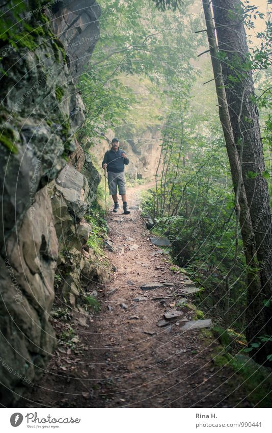 wanderlust Masculine 1 Human being 60 years and older Senior citizen Environment Nature Landscape Plant Summer Bad weather Fog Forest Rock Mountain