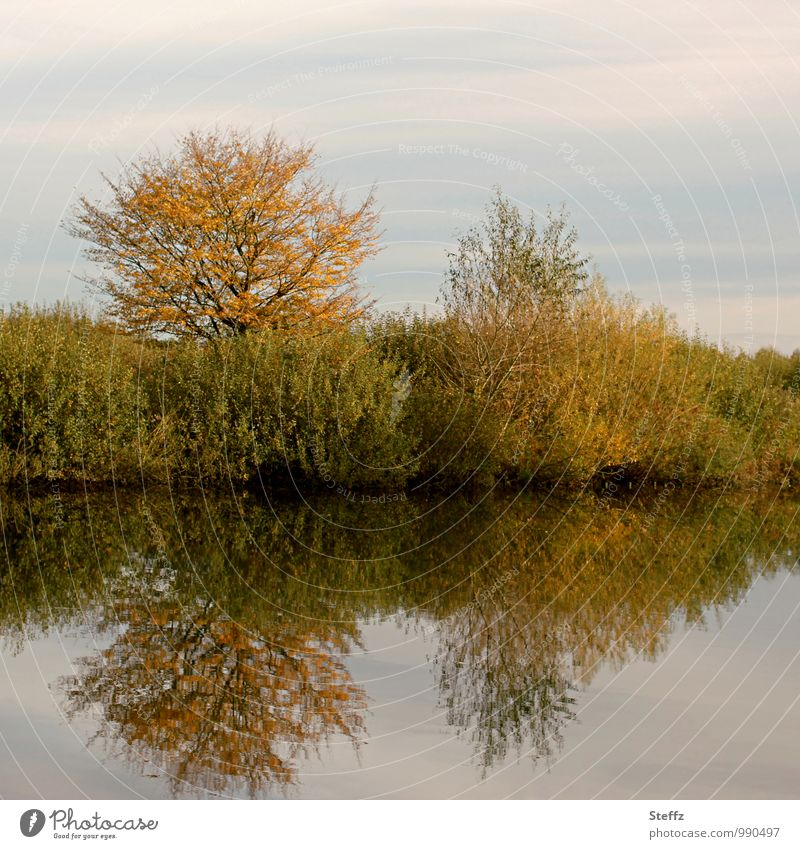 Silence and peaceful atmosphere on the lakeshore in autumn silent Calm Peaceful Relaxation Water reflection Surface of water Bushes deciduous trees Autumn trees