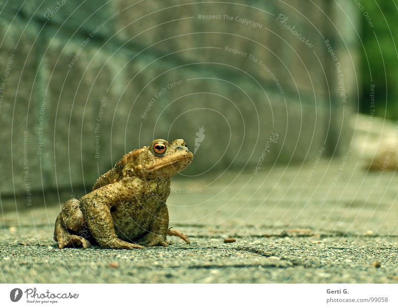 Green Animal Street Wall (building) Wall (barrier) Wait Hiking Sit Dangerous Threat Asphalt Sidewalk Boredom Frog Smoothness Stay