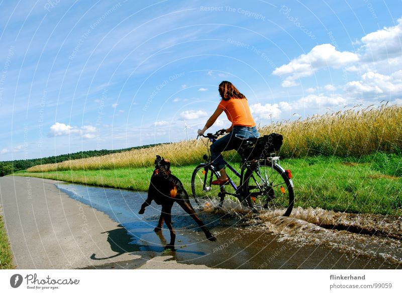 joie de vivre. Grain Joy Summer Bicycle Woman Adults Animal Water Sky Clouds Field Street Dog Driving Funny Wet Blue Doberman Puddle Short exposure