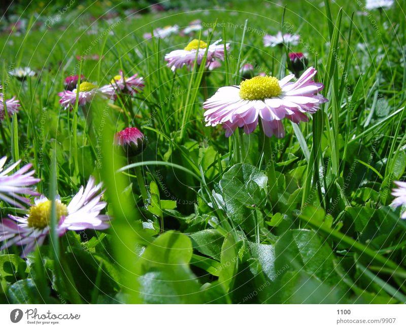 spring meadow Meadow Spring Flower