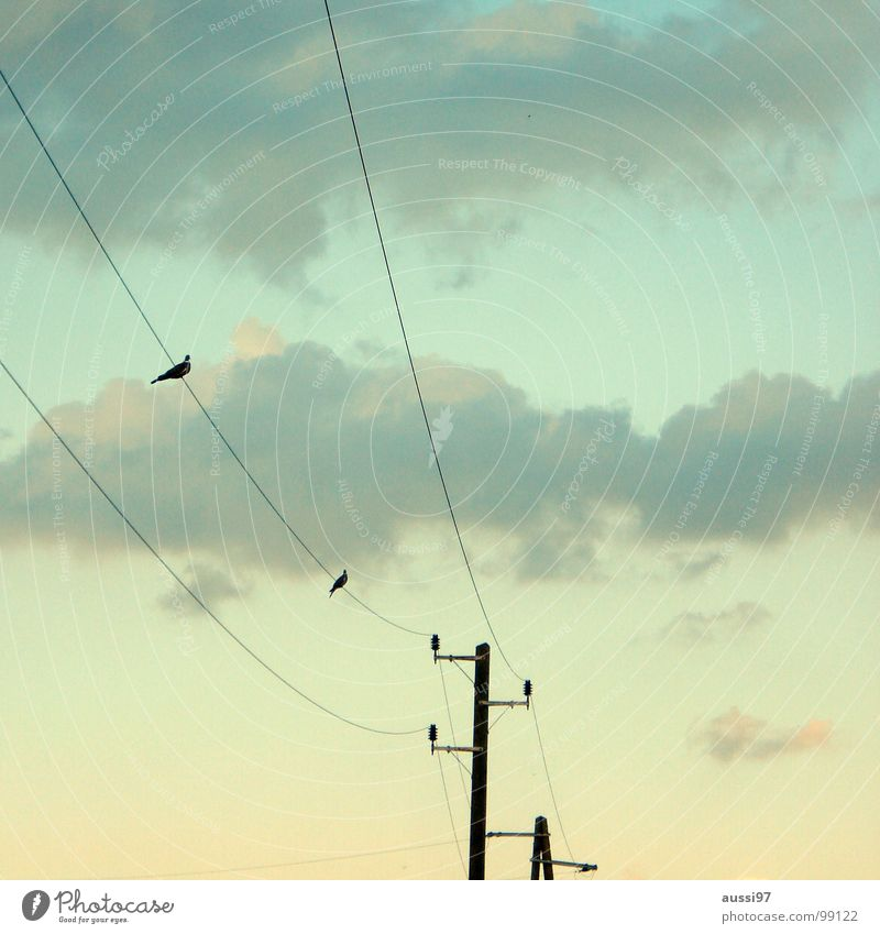 attempted rapprochement Electricity Cable Together Overhead line Bird Clouds Flirt Electrical equipment Technology Peace power supply Energy industry Connection
