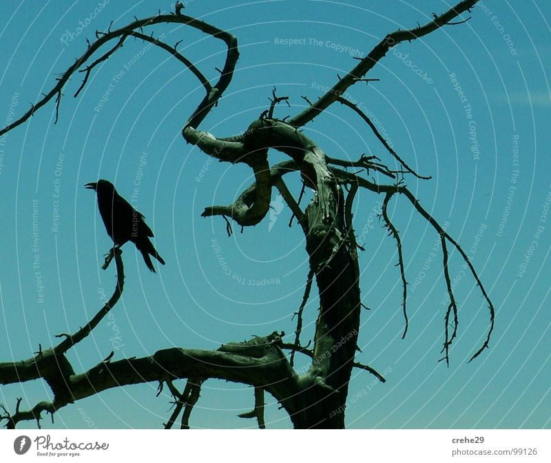 Sky Tree Green Blue Black Bird Bushes Branch Disaster Twig Fairy tale Blue-green