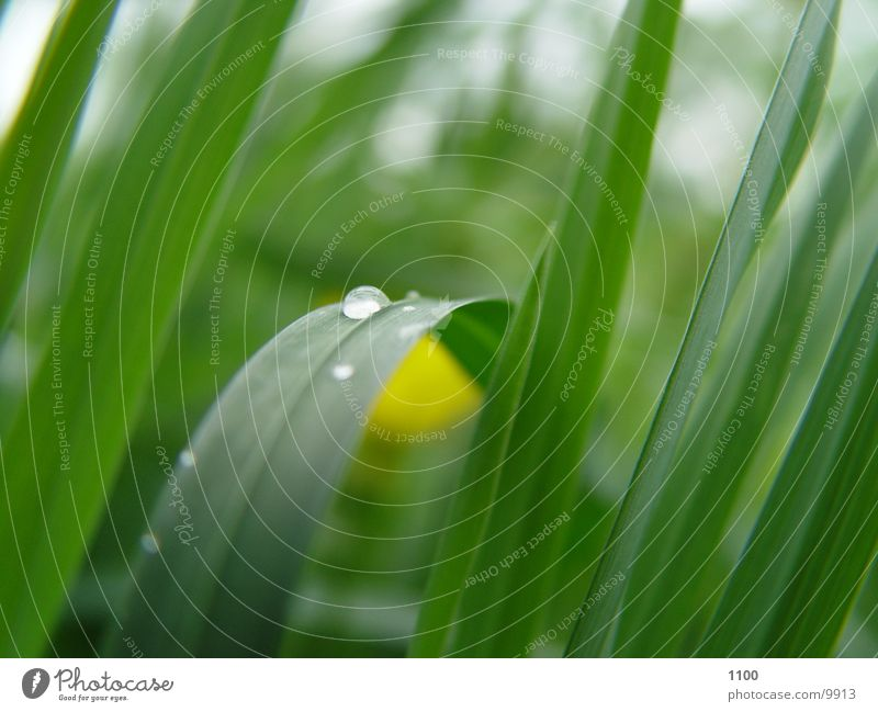 Green Meadow Grass Drops of water Rope