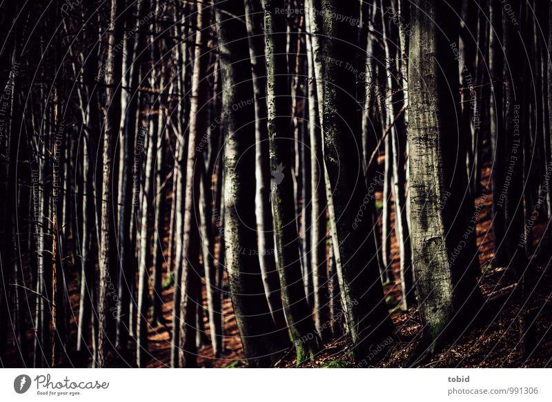 Nature Plant Tree Leaf Landscape Dark Forest Cold Autumn Idyll Elegant Beautiful weather Hill Tree trunk Autumn leaves Autumnal