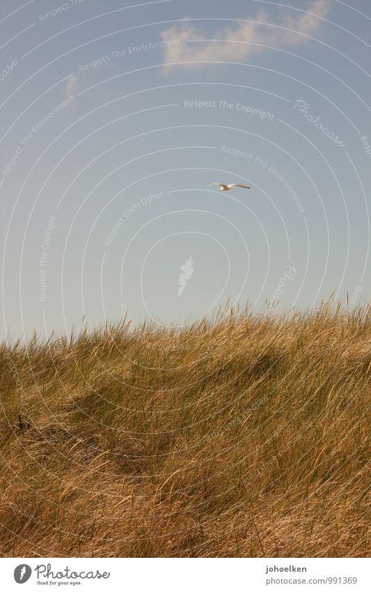 Sky Vacation & Travel Plant Summer Sun Ocean Animal Far-off places Autumn Coast Grass Spring Freedom Flying Bird Horizon