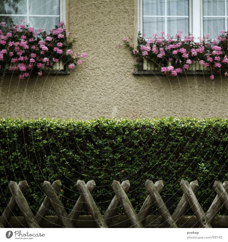 Plant Flower Window Wood Garden Line Facade Grief Clean Idyll Fence Cozy Distress Curtain Sporting event Tradition