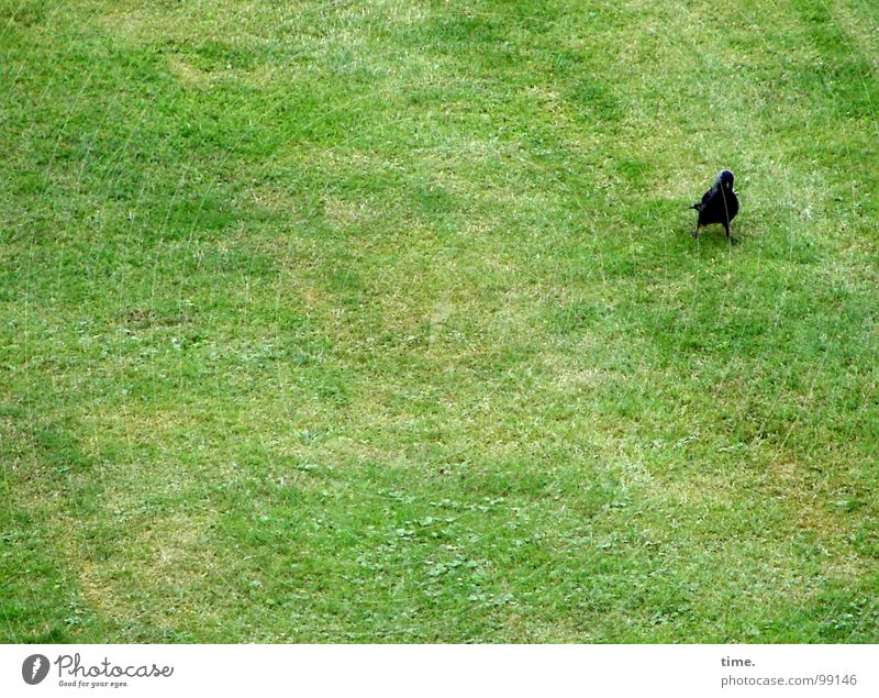 Groundkeeper (powered by akai) Looking Meadow Bird To feed Green Loneliness Concentrate Jackdaw Blade of grass Advance party Search Lawn Where are the others?