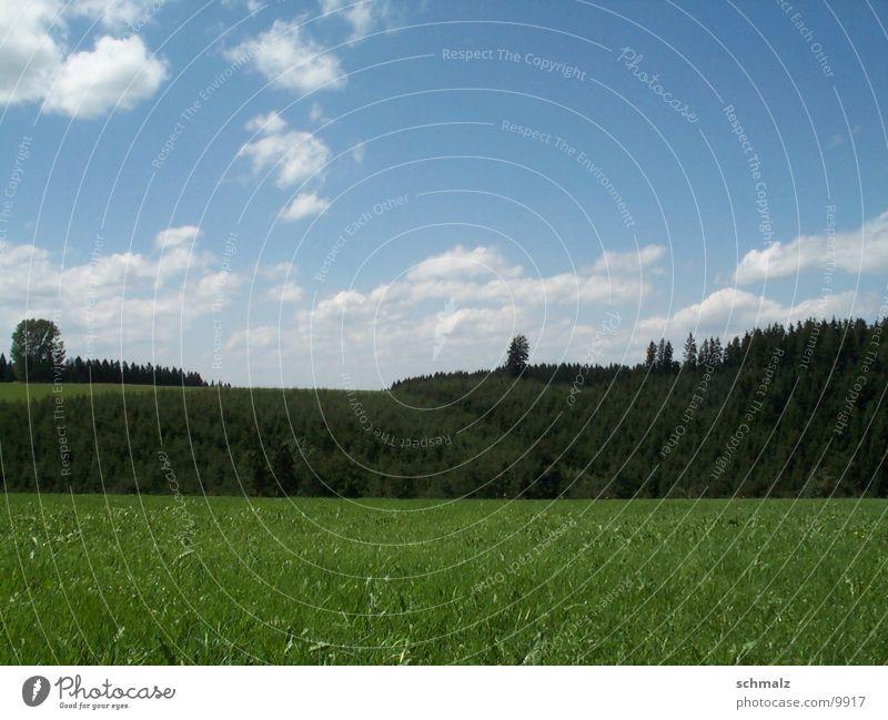 Sky Tree Green Mountain Field Lawn