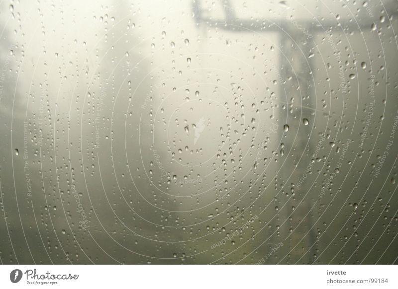 fog Wood flour Autumn Dangerous foggy water blur pine trees Elevator nebulous misty cryptic cloudy dark beastly weather