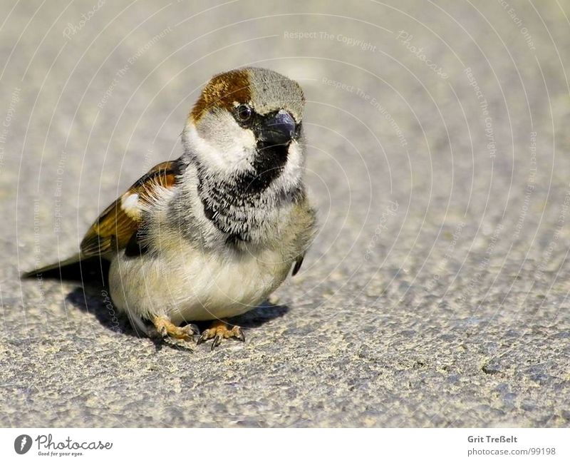 One foot in front of another ;-) Hop Bird Sparrow Sweet Beak Walking Feather
