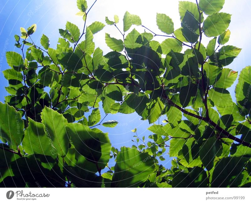 In the Garden of Eden Tree Green Summer Spring Mount Eden Deities Blue Sky Branch Tree trunk Sun Weather God