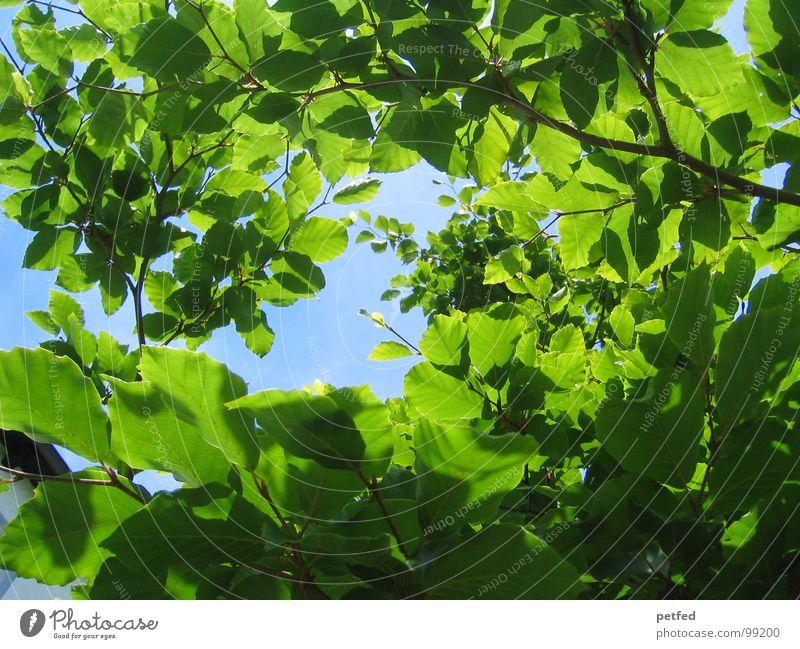In the Garden of Eden II Tree Green Summer Spring Mount Eden Deities Earth Sand Blue Sky Branch Tree trunk Weather God
