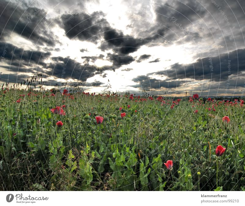 poppy day Field Poppy Poppy field Hope Grass Horizon Clouds Sky Bad weather Storm clouds Calm Loneliness Serene Landscape Wide angle Green Red Black