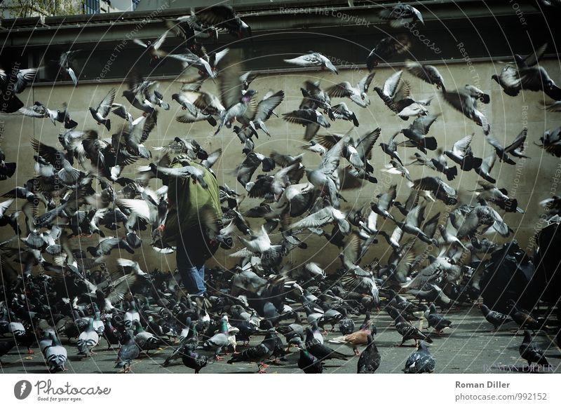 dove man Human being Masculine Male senior Man Senior citizen 1 60 years and older Paris France Capital city Downtown Animal Bird Group of animals Flock Flying
