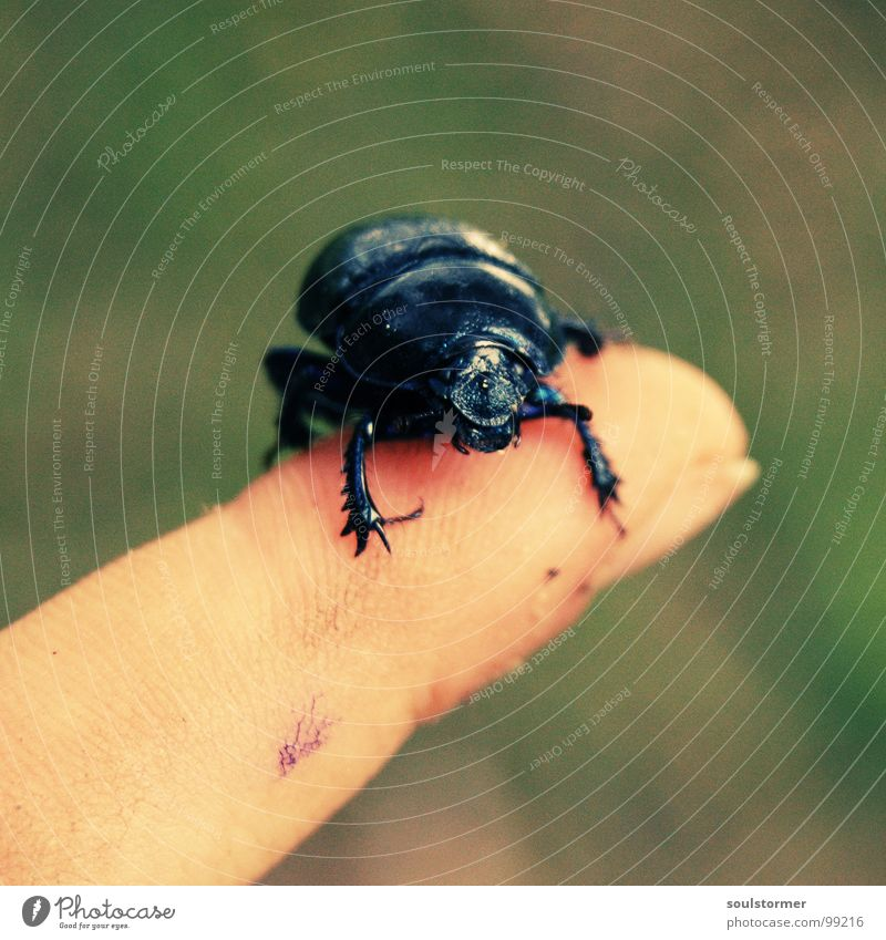 Legs Feet Arm Walking Fingers Wing To fall To hold on Insect Escape Beetle Crawl Panic Stick Armor-plated Cross processing