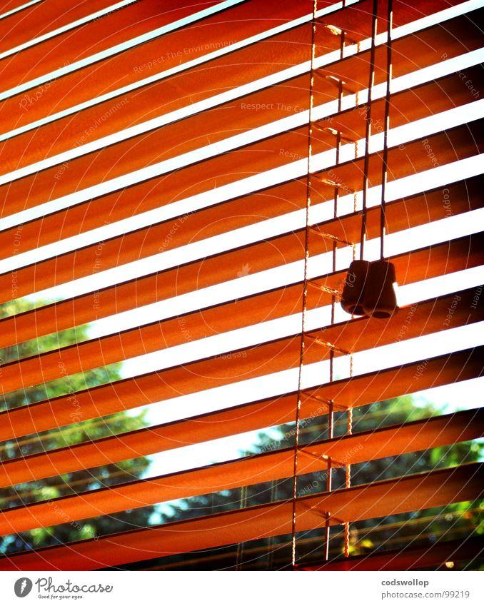 venetian blind people Window Shutter Venetian blinds Tree Sky Needy Living room Detail Summer view Looking corduroy lost translational