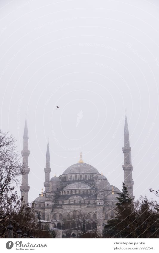 January day in Istanbul Vacation & Travel Far-off places City trip Autumn Winter Bad weather Fog Turkey Town Downtown Manmade structures Building Architecture