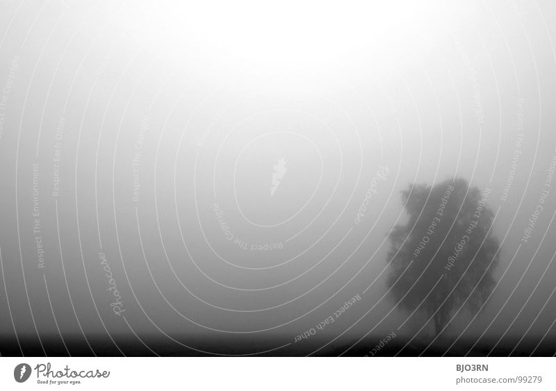 simply carry on Tree Fog Gloomy Black White Loneliness Horizon Dreary Soft Vail Shroud of fog Morning Morning fog Grief Distress Black & white photo wise Sky