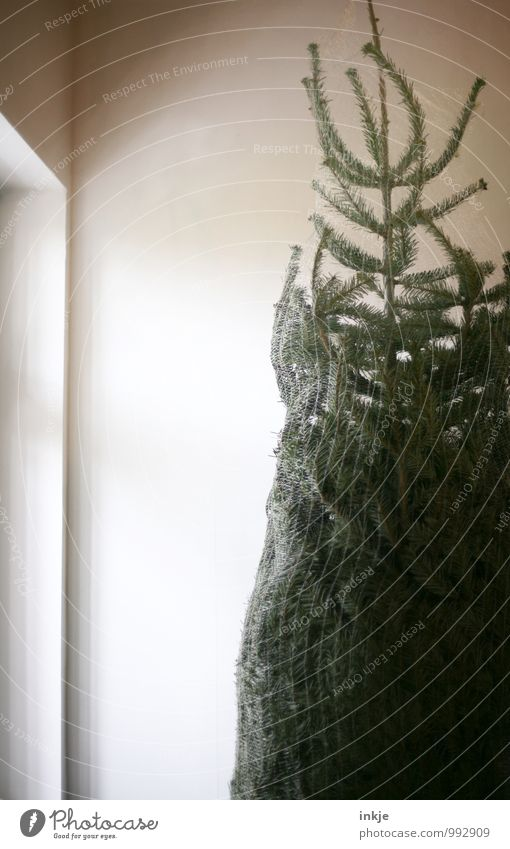 Christmas & Advent Window Gray Above Brown Lifestyle Flat (apartment) Room Living or residing Authentic Stand Large Tall Simple Net Christmas tree