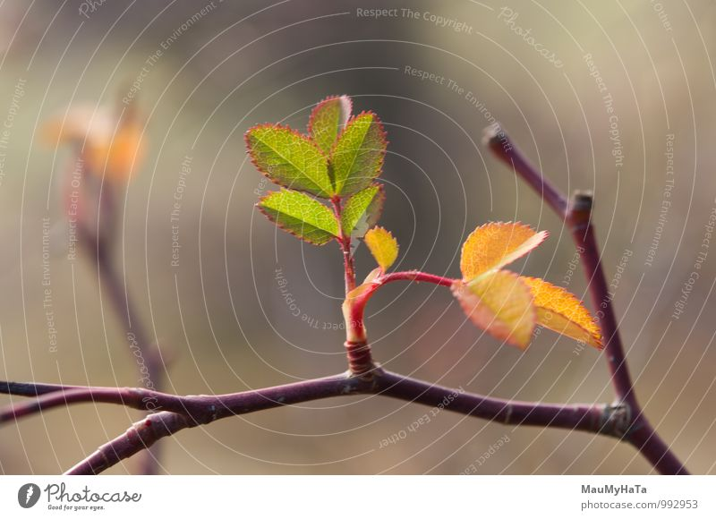 Last days of warm autumn Environment Nature Plant Tree Leaf Forest Brown Green Branch Light Twig Horizontal Environmental Conservation Beauty In Nature