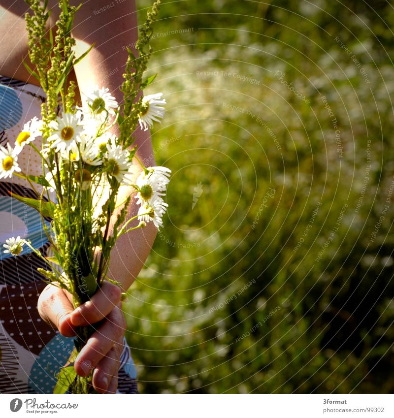 Woman Hand Beautiful Summer Flower Meadow Freedom Grass Garden Happy Warmth Spring Fingers Romance To hold on Kitsch