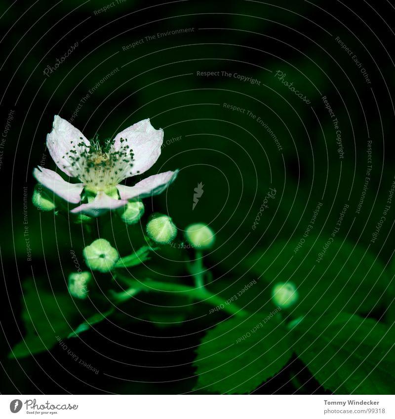 Nature Plant Green Colour Summer Flower Landscape Animal Warmth Spring Garden Growth Illuminate Fresh Wet Soft
