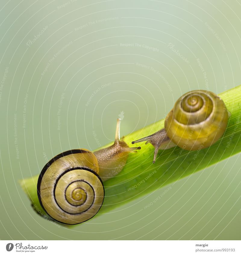 snail meeting place Nature Leaf Animal Wild animal Snail 2 Rutting season Observe Touch Crawl Kissing Love Embrace Esthetic Friendliness Happy Kitsch Slimy