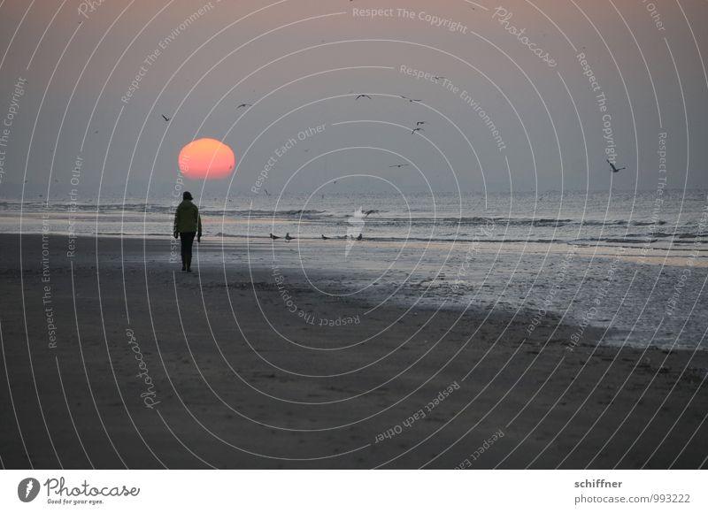 Belgian sunken 1 Human being Sky Horizon Sun Sunrise Sunset Waves Coast Beach Going Sadness Longing Wanderlust Loneliness Calm Relaxation Promenade