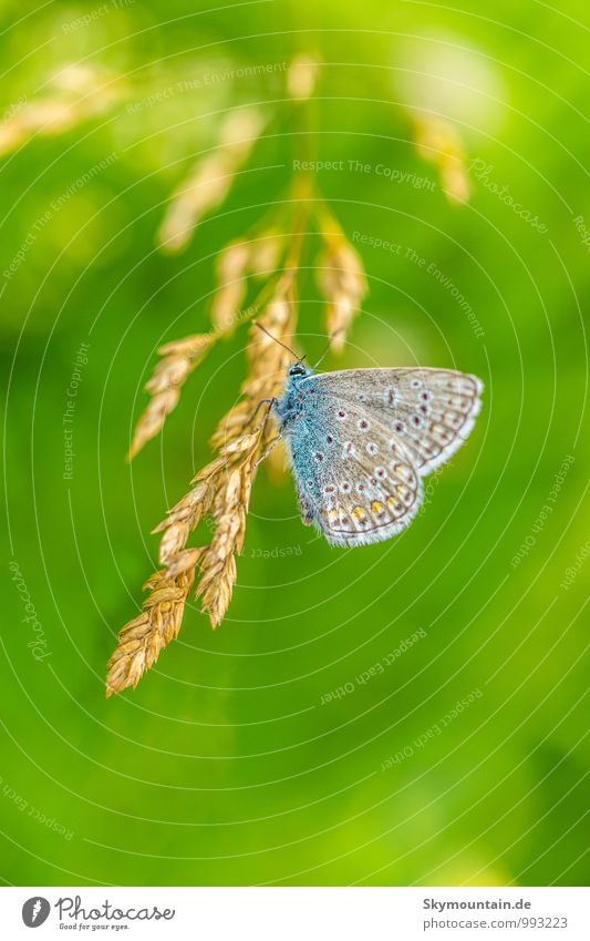 blue Lifestyle Elegant Well-being Contentment Relaxation Leisure and hobbies Reading Environment Nature Animal Grass Butterfly Wing 1 Discover Flying To enjoy
