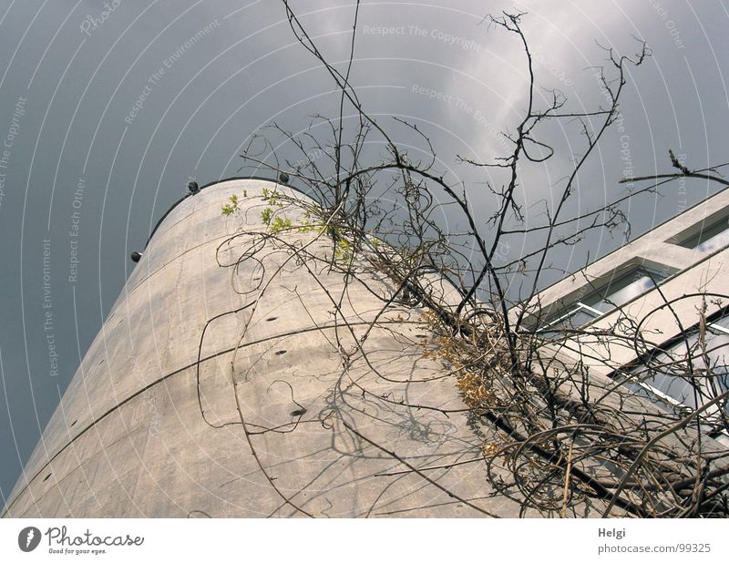 tall... Building House (Residential Structure) Window Concrete Gray Overgrown Plant Tendril Stalk Clouds White Towering Attach Muddled Round Curved Corner Frame