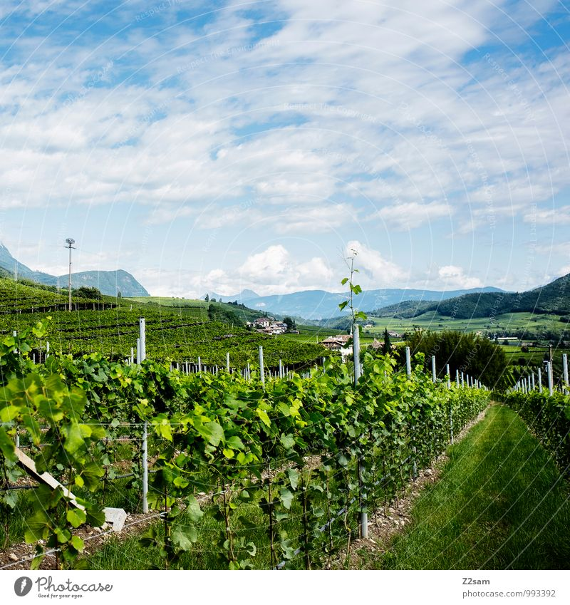 cold Wine Environment Nature Landscape Sky Clouds Summer Beautiful weather Plant Bushes Alps Mountain Healthy Sustainability Natural Blue Green Relaxation