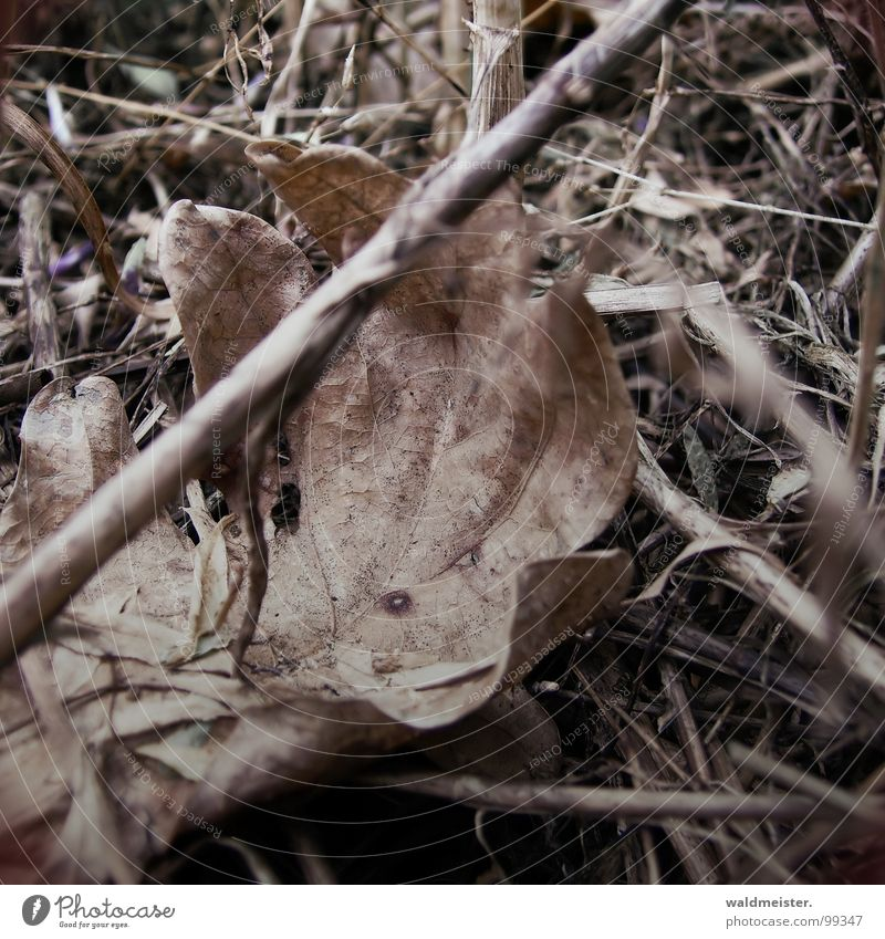 Leaf Autumn Meadow Grass Transience Dry Forget Dried